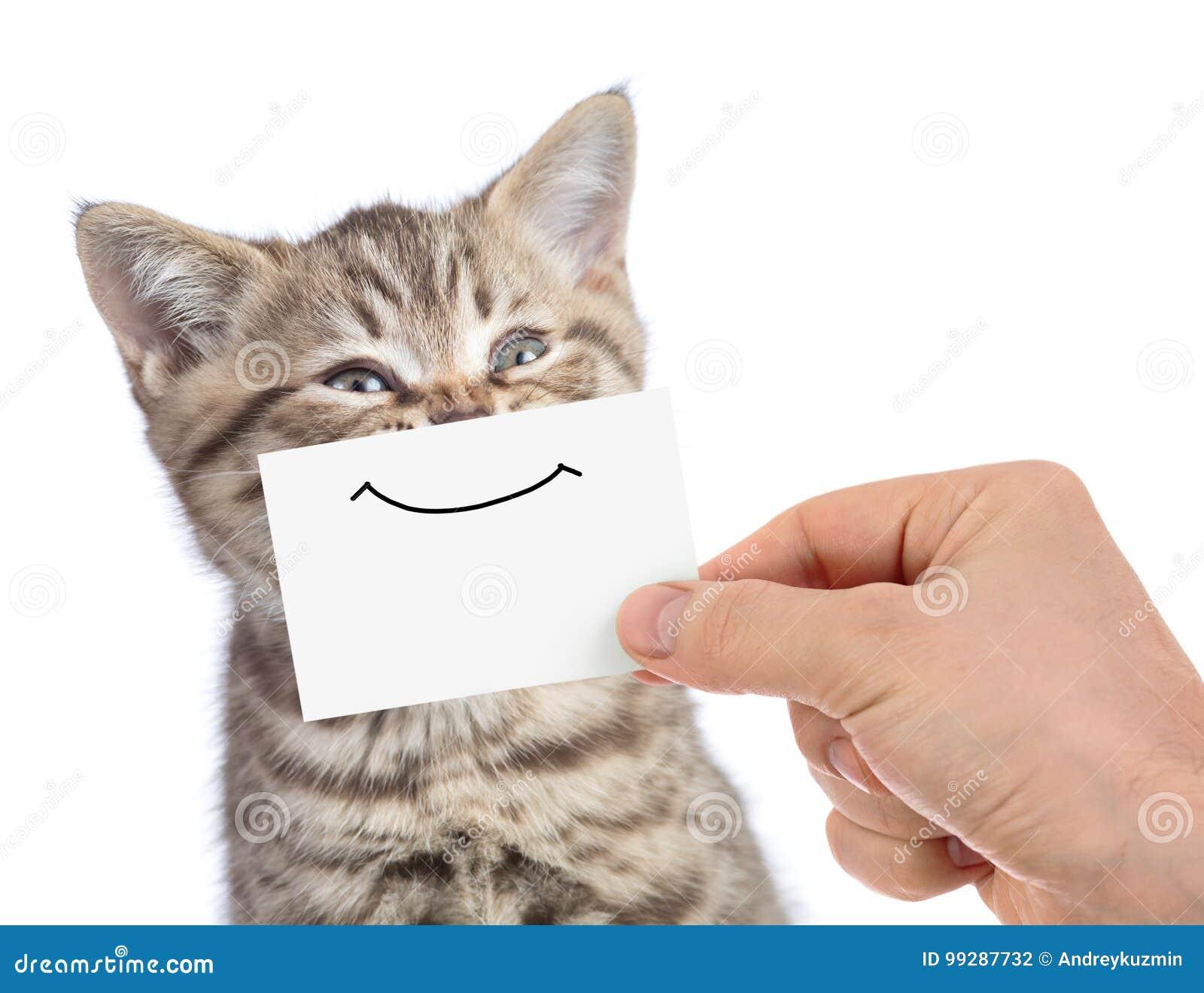 Retrato joven feliz divertido del gato con sonrisa en la cartulina aislada en blanco