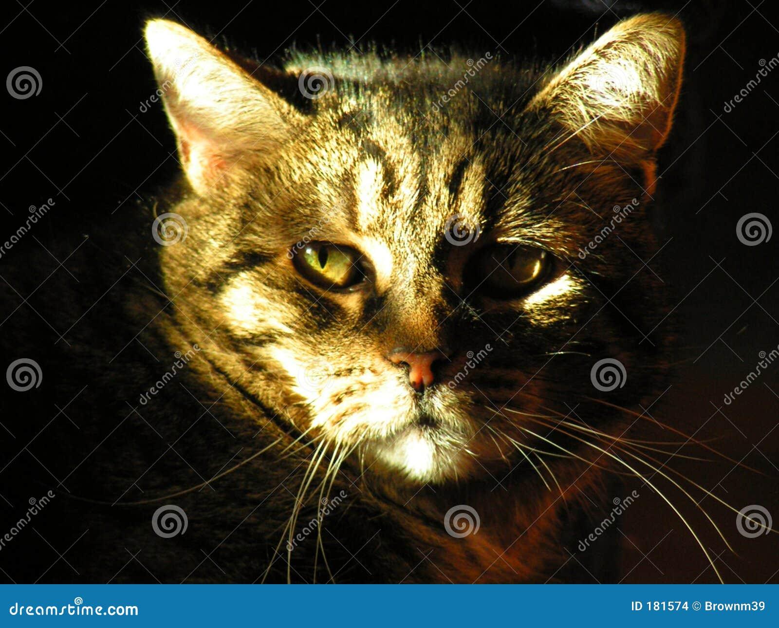 Retrato mayor del gato