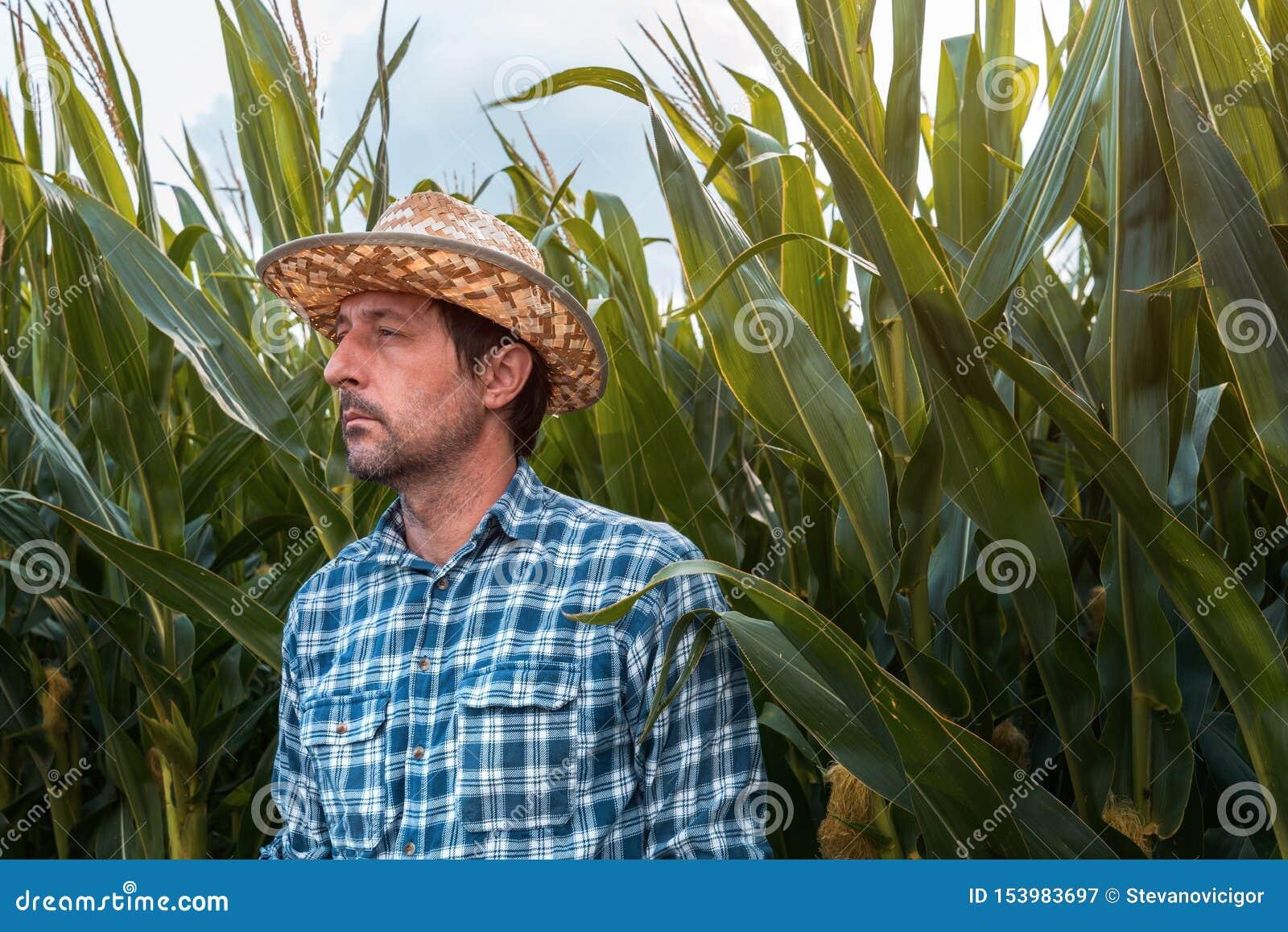 Retrato serio del granjero del maíz en campo cultivado