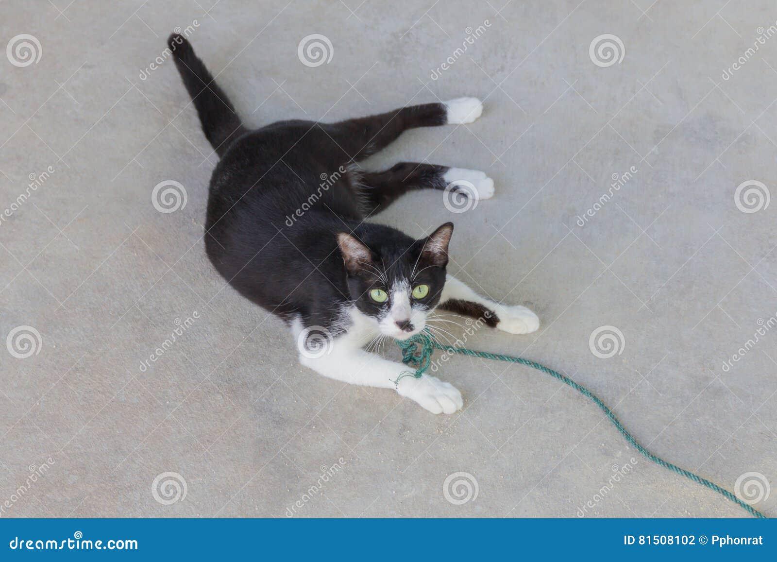 Retrato siniestro espeluznante de la cara del gato negro