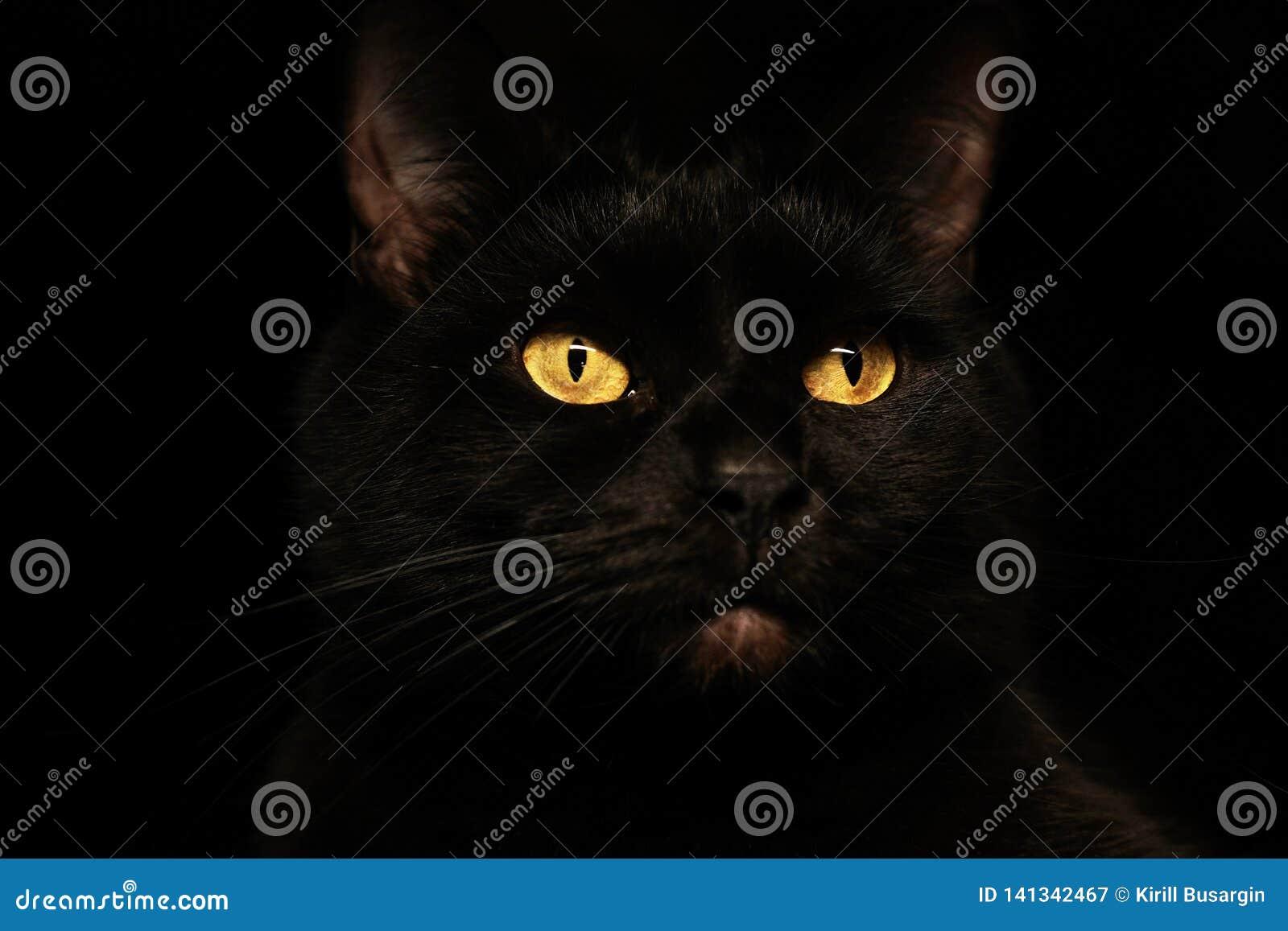 Retrato siniestro espeluznante de la cara del gato negro en fondo negro