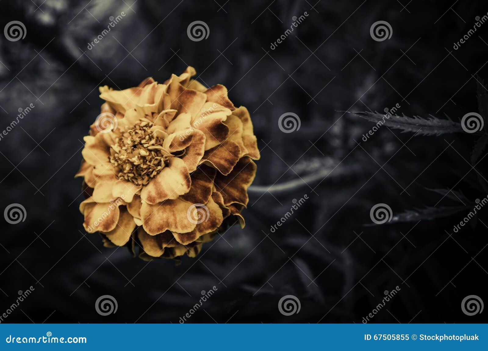 Retro flowers,Vintage Flowers background