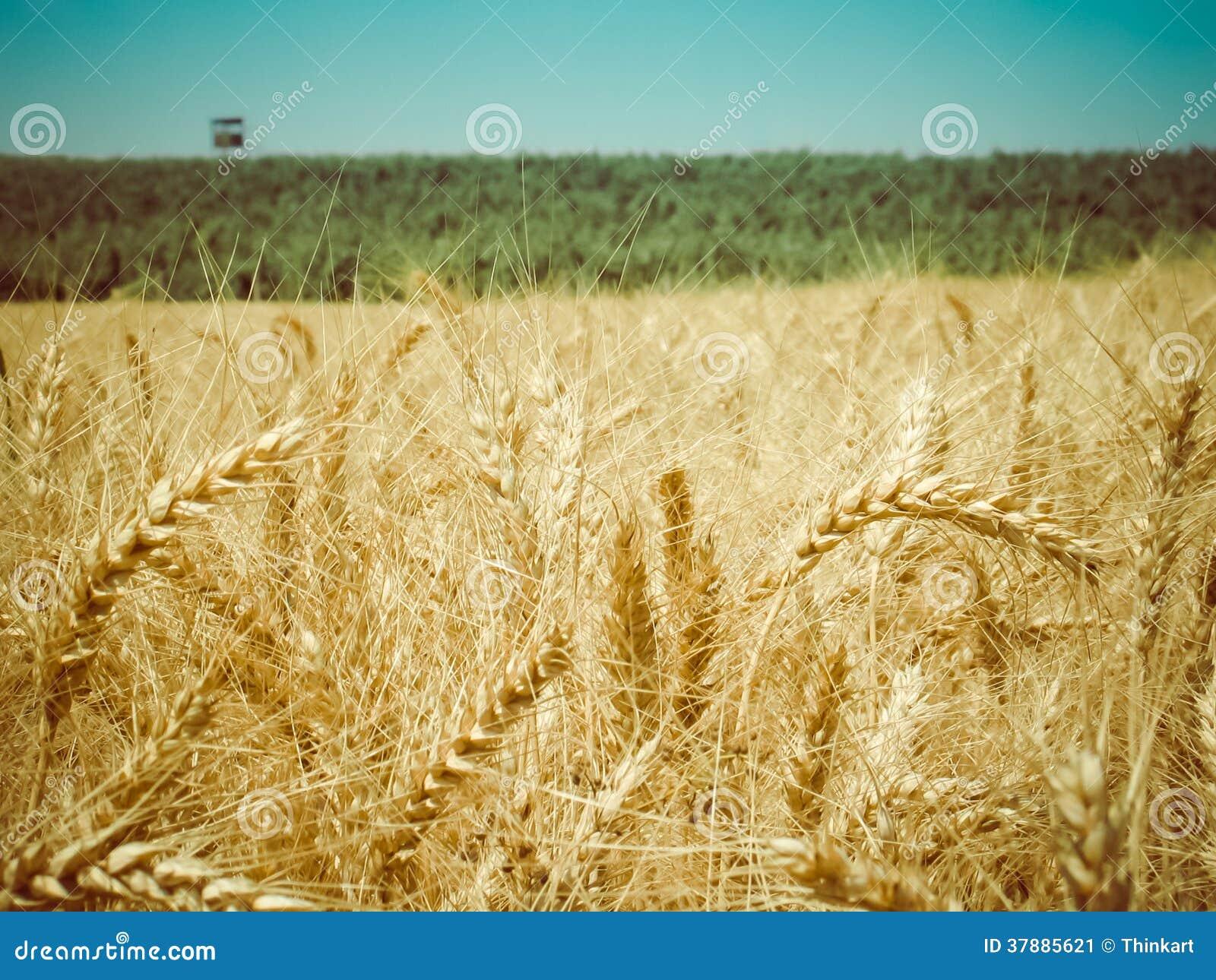Retro oogsttijd