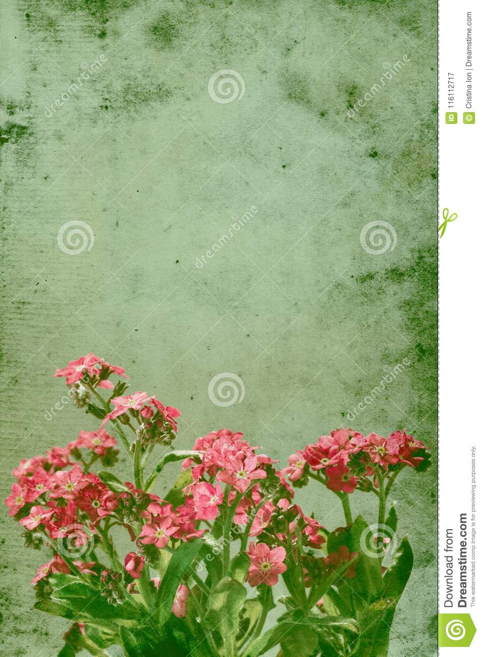 Retro Still Life Image Of Pink Forget Me Not Flowers Stock Image