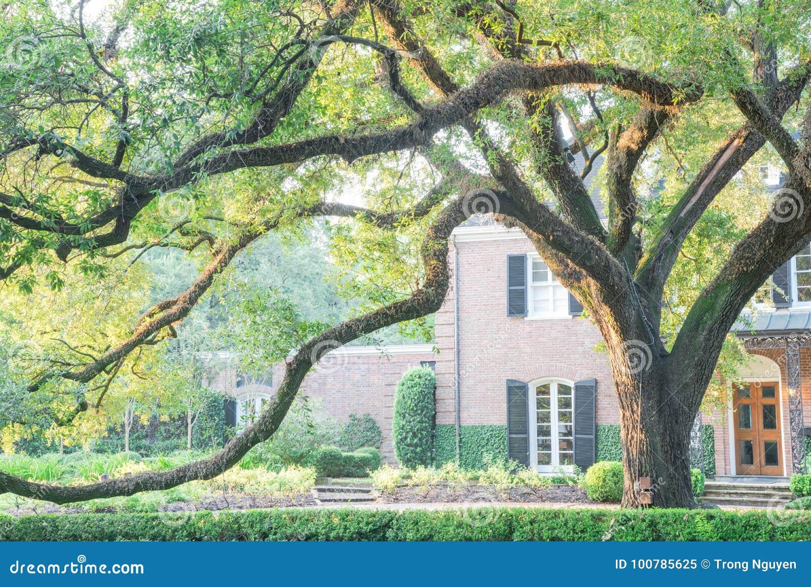 Reusachtig levend eiken boomhuis Houston, Texas, de V.S.