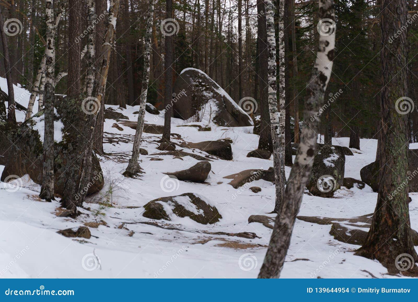 Reusachtige keien en stenen in het midden van een sneeuwbos