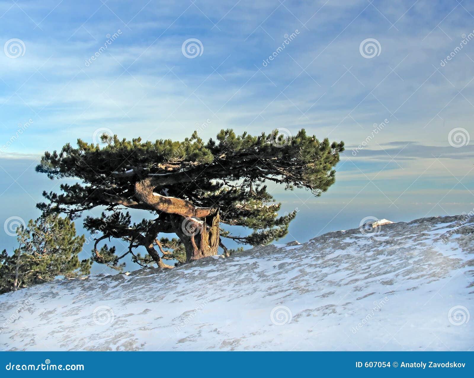 Reusachtige oude boom