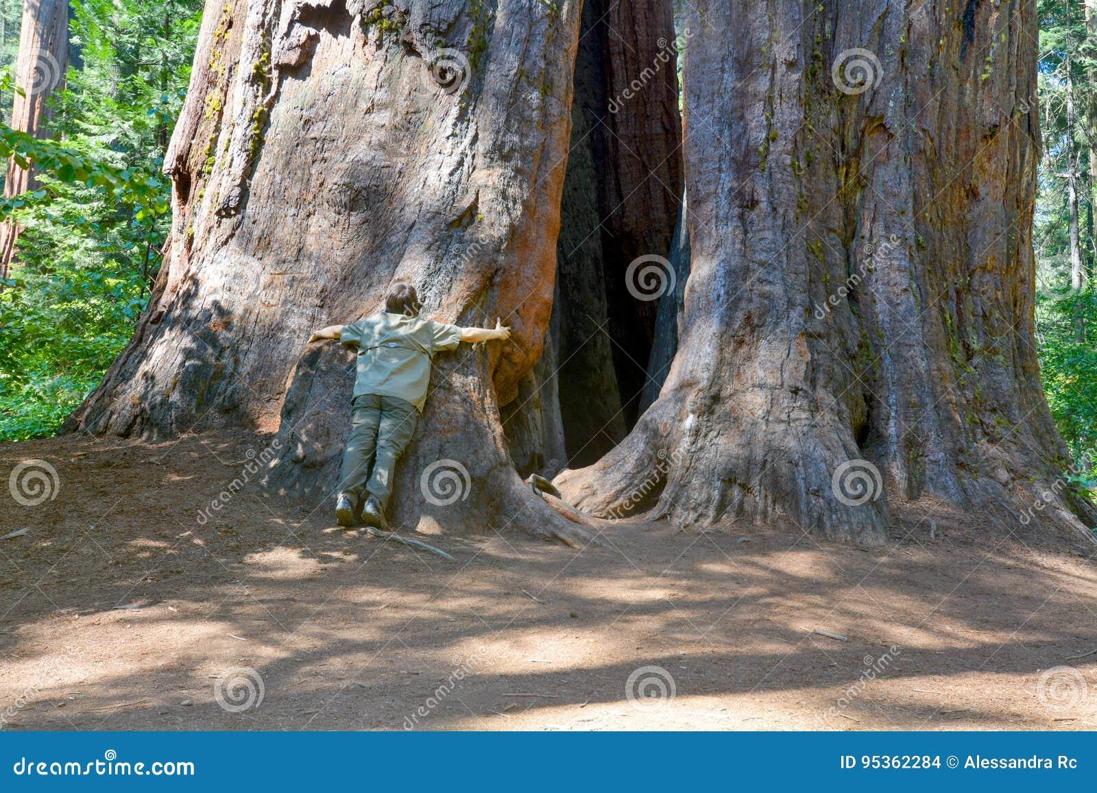 Reuze bomen