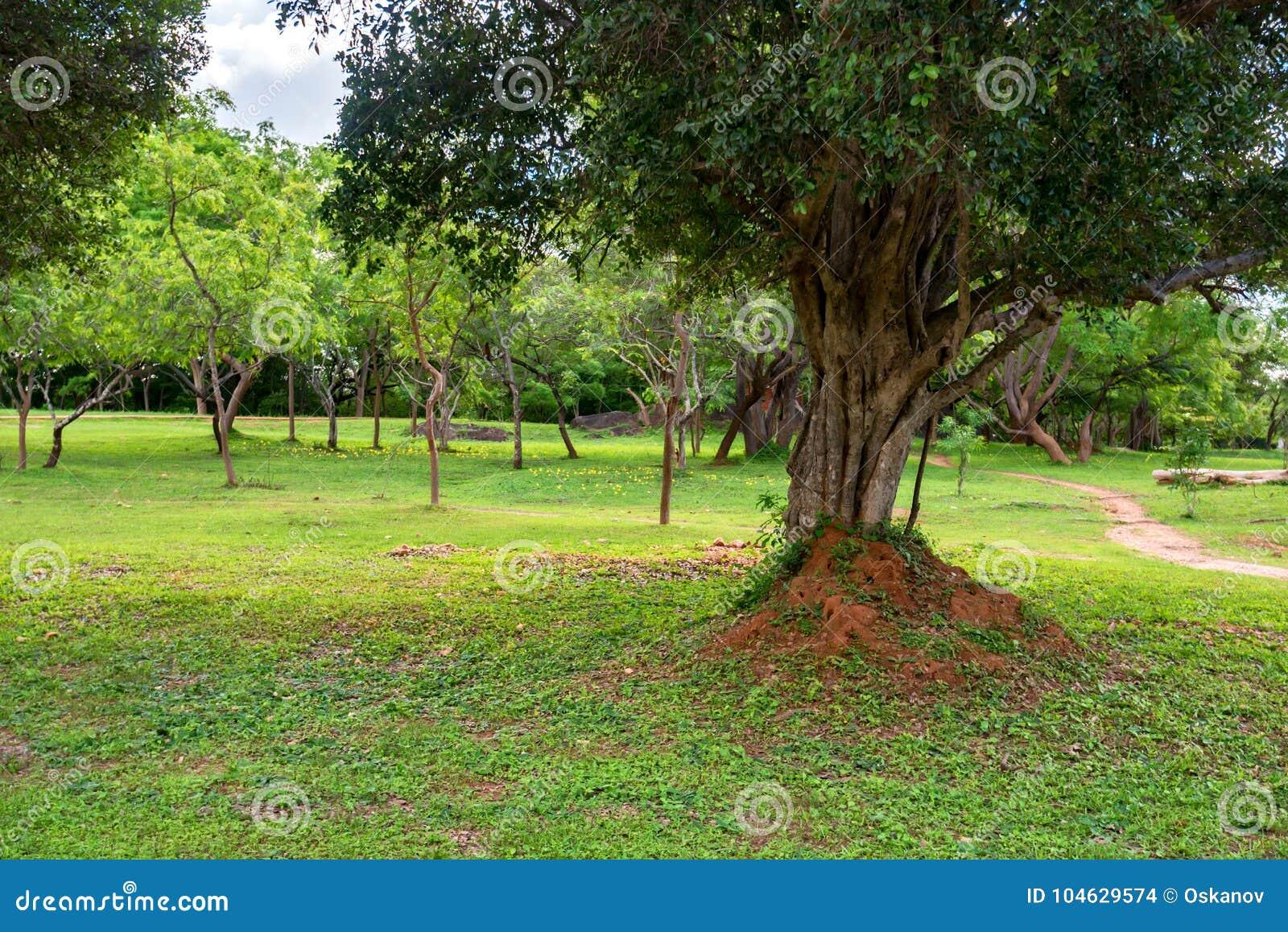 Download Reuze termiethoop stock foto. Afbeelding bestaande uit afrika - 104629574
