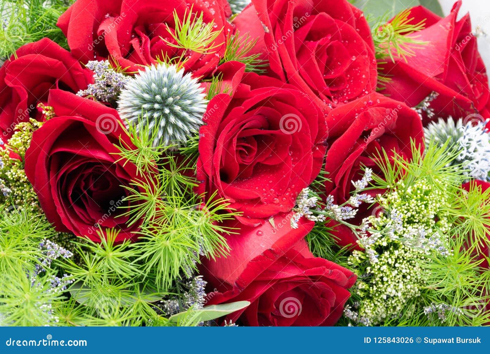 Rewolucjonistek menchie I róża pięknie układaliśmy w kwiat wazie Ro
