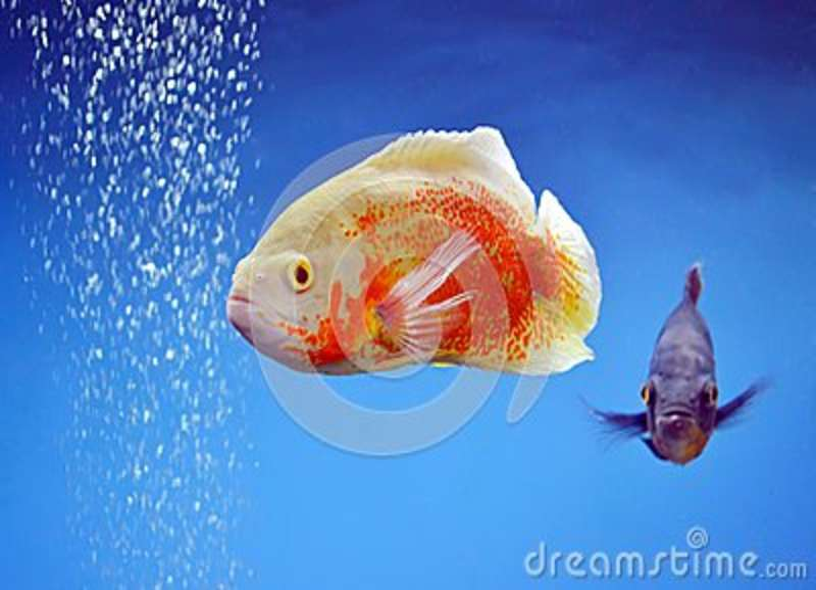 Rewolucjonistki ryba
