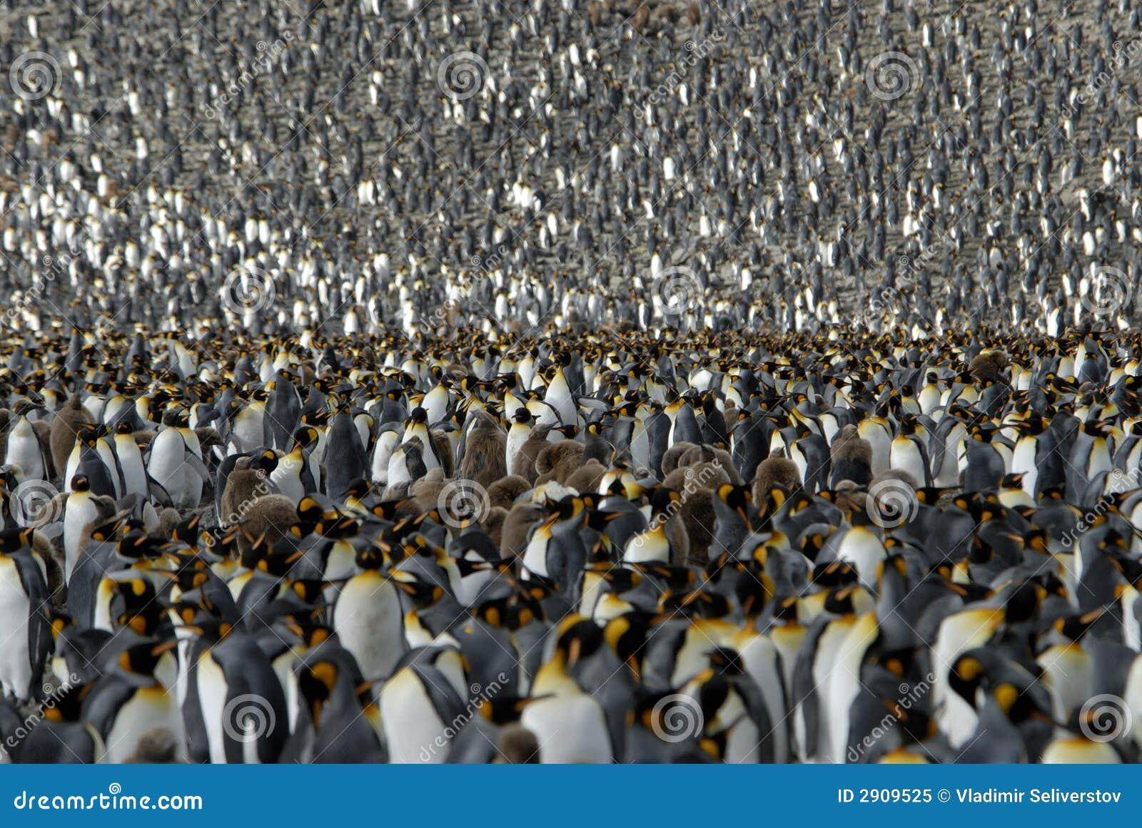 Rey pingüino