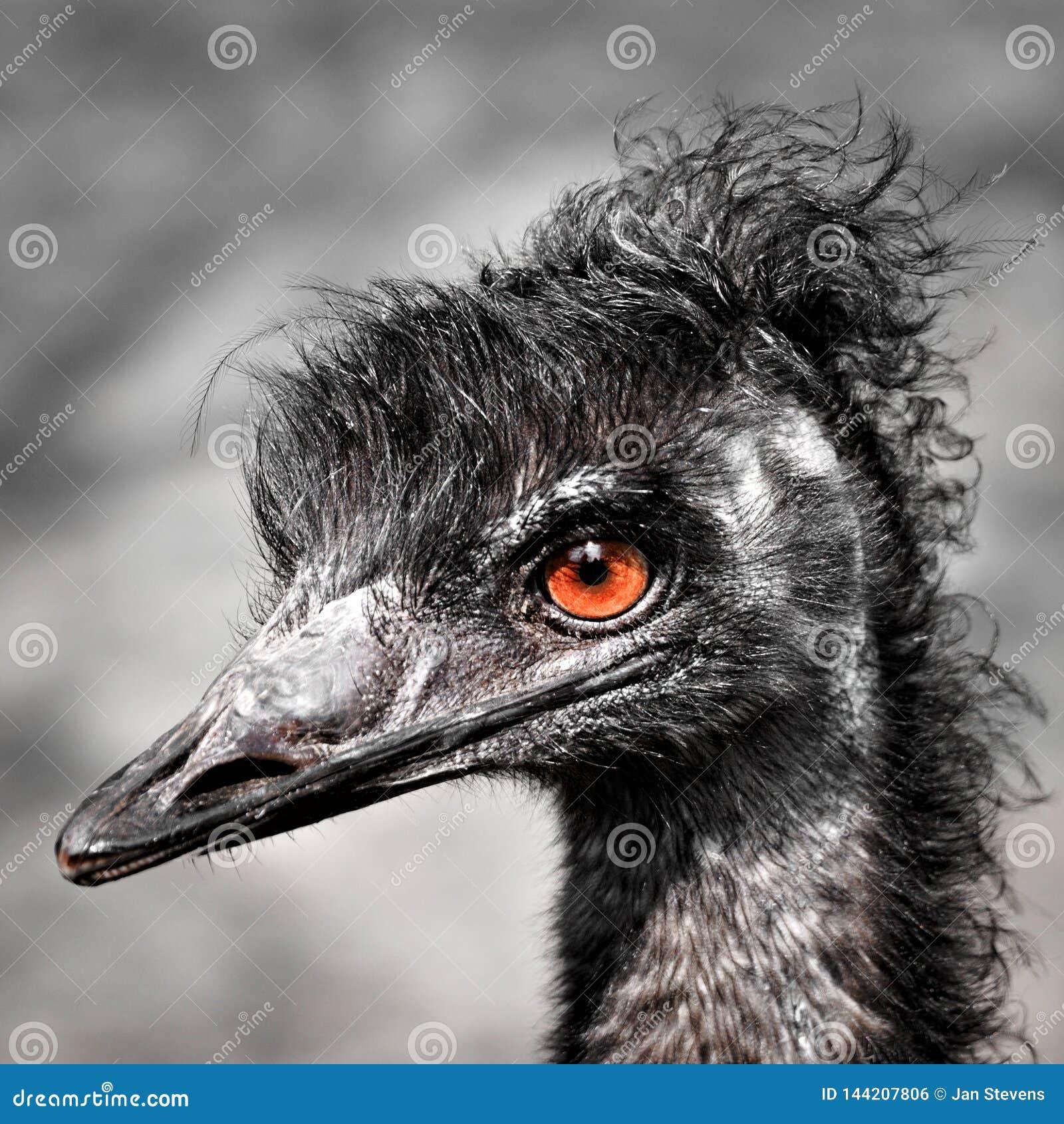 Rhea (bird