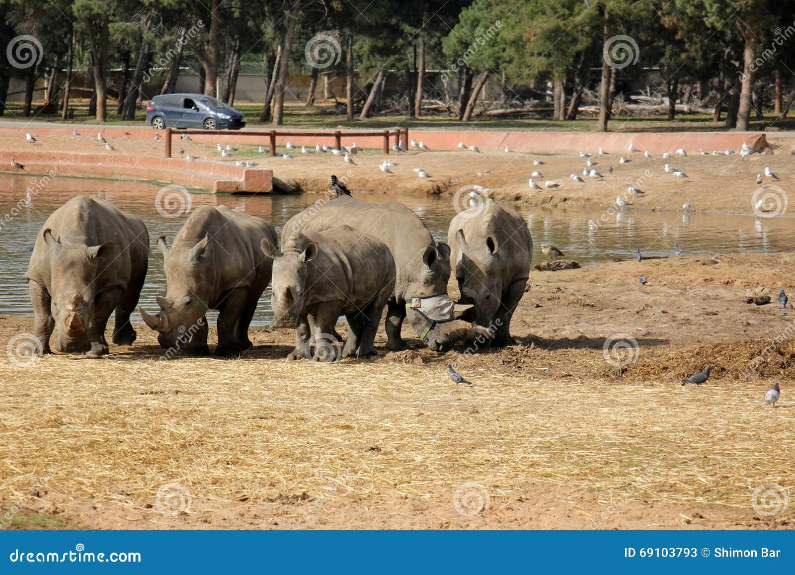 Rhino free safari