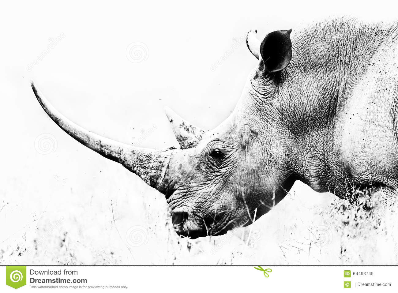 Black and white art photography a long horn of a endangered rhino in lake nakuru kenya africa