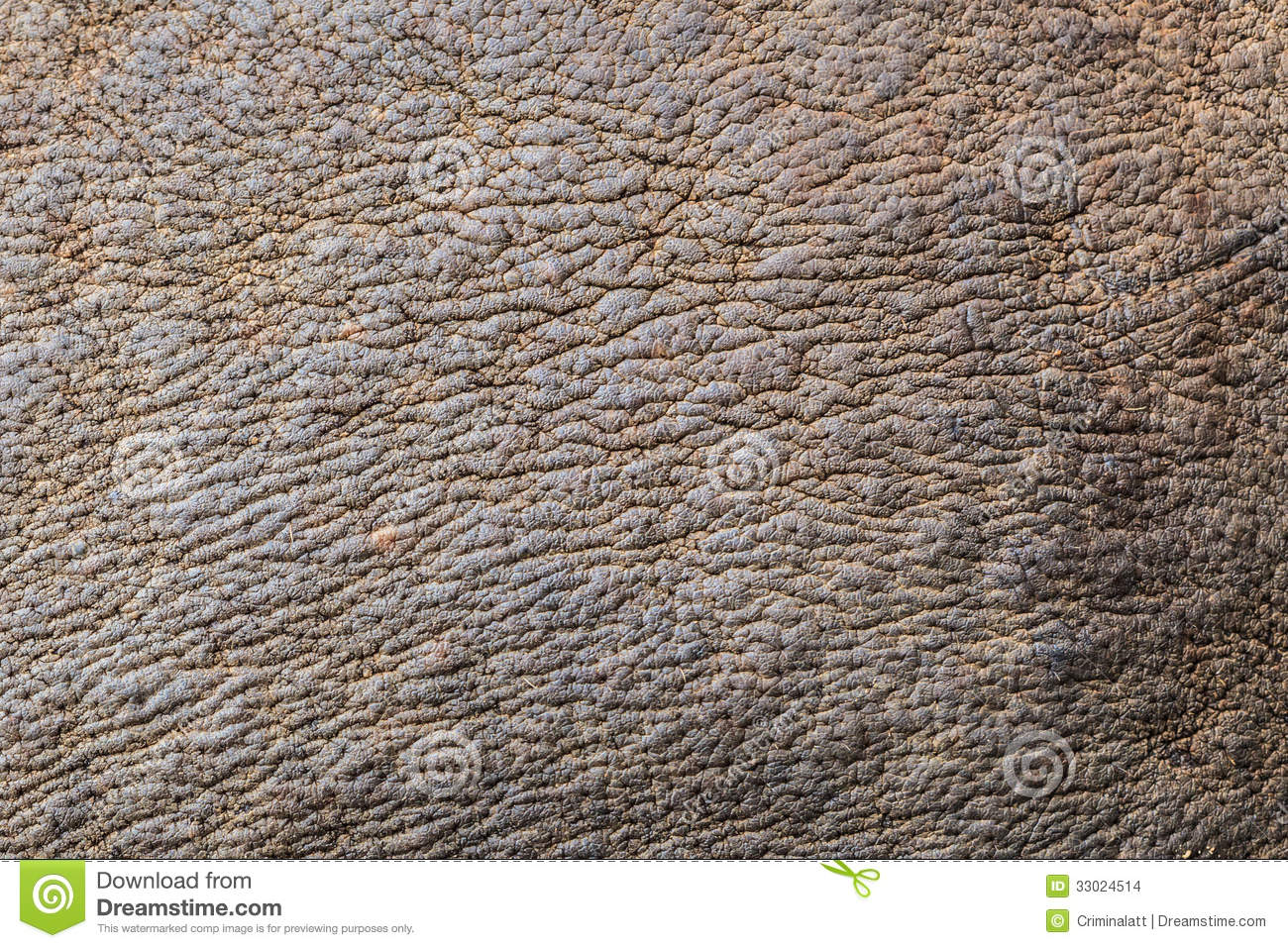 Rhino skin stock photo. Image of animal, rough, rhinoceros ...