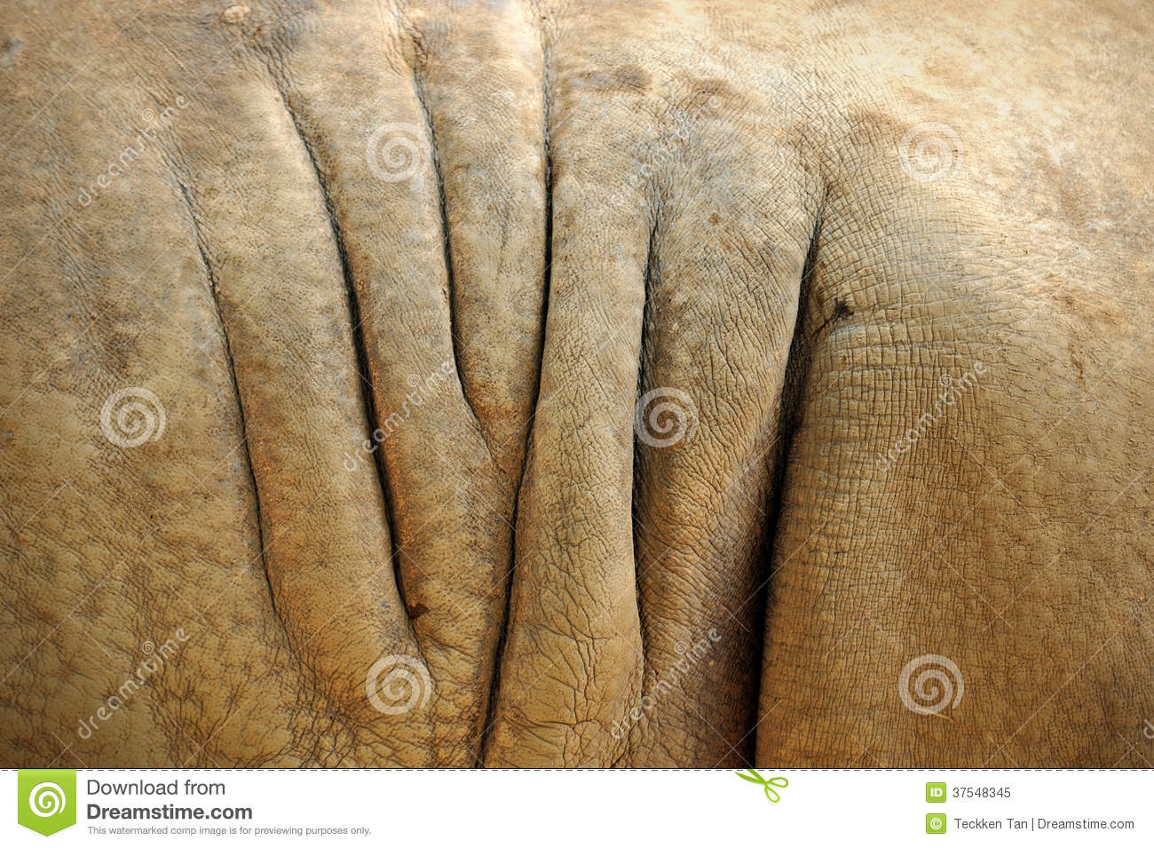 Rhino Skin Texture Royalty Free Stock Photo - Image: 37548345