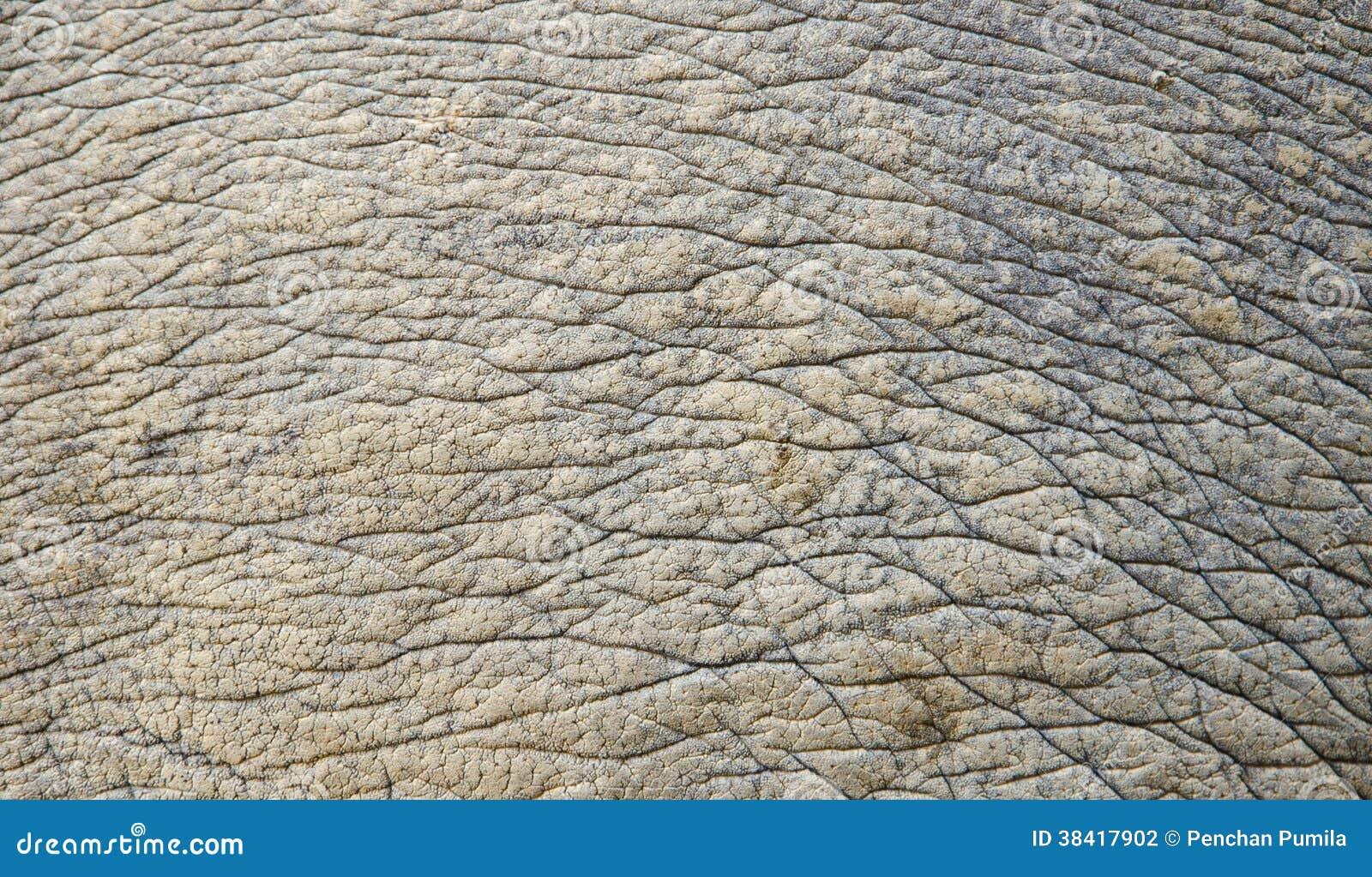 Rhino Skin Texture Stock Photography - Image: 38417902
