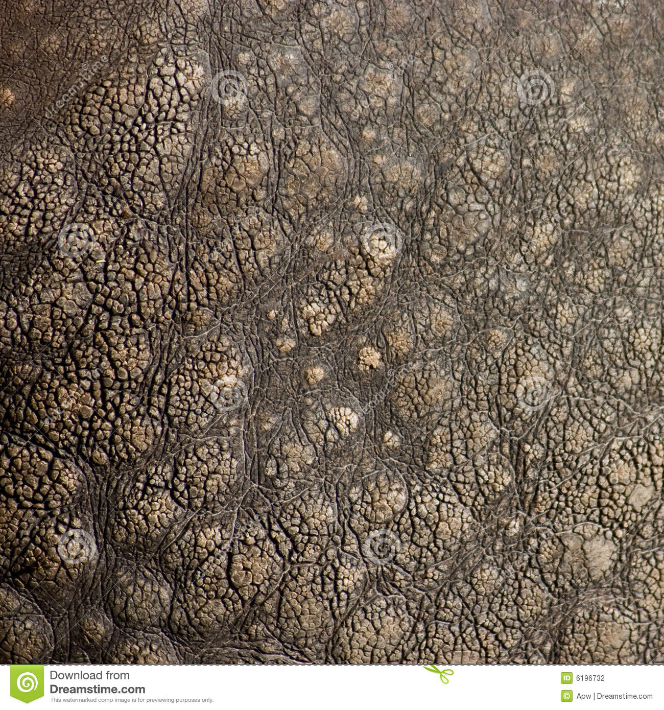 Rhino Texture Stock Photography - Image: 6196732
