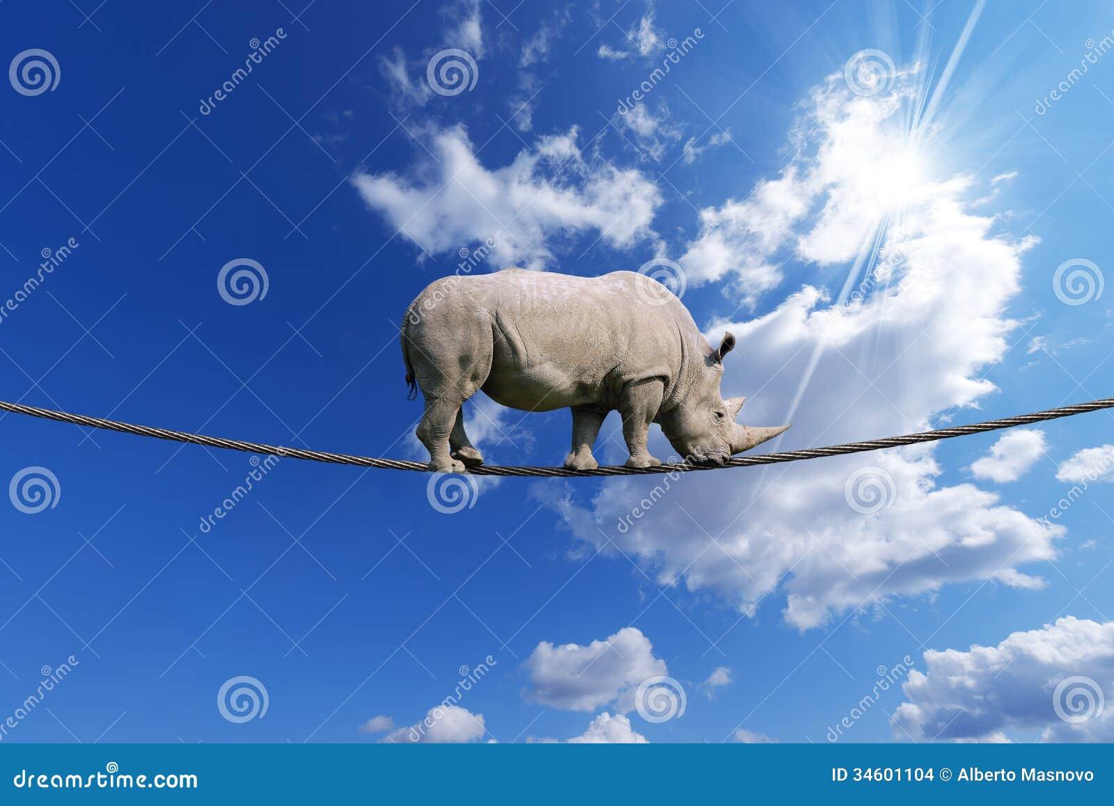 Rhino Walking on Rope stock illustration  Illustration of africa