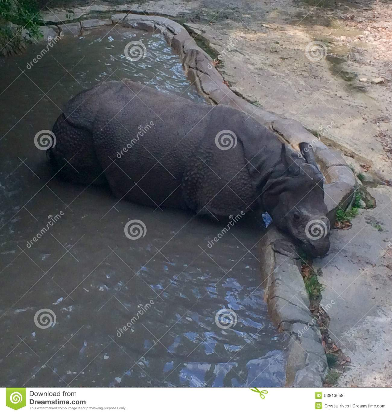 Rhino at the zoo stock photo image 53813658 for Zoo bathroom decor