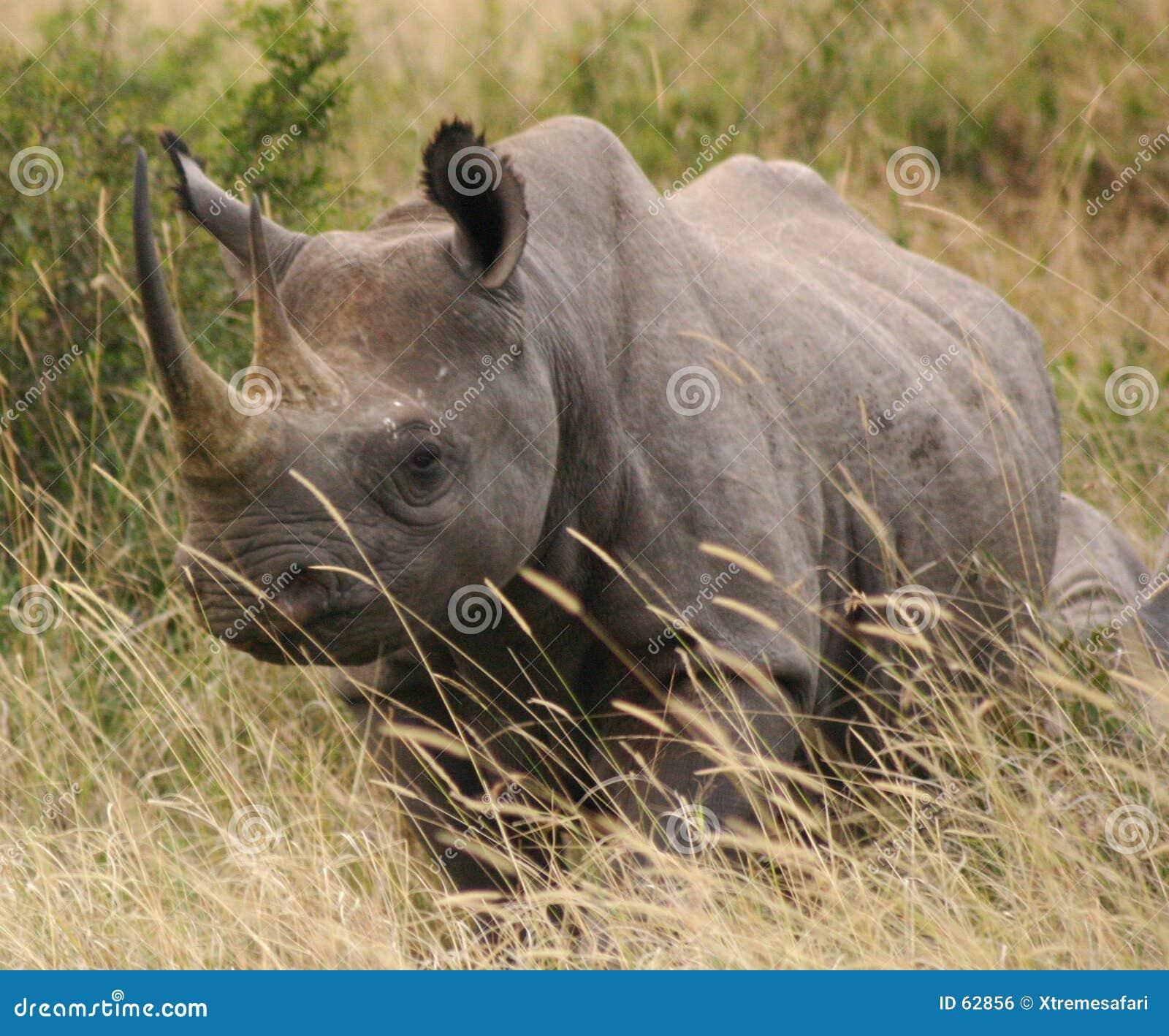 Rhinocéros 2.04 de Tsavo