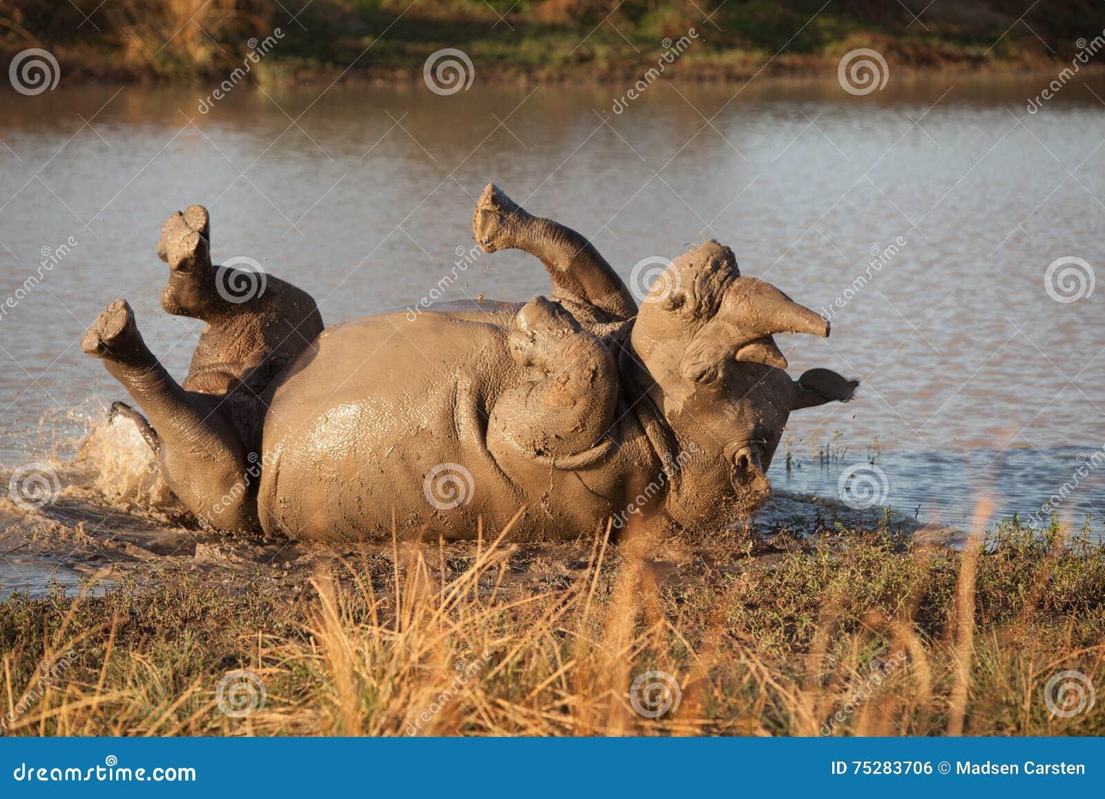 Rhinocéros de Roling