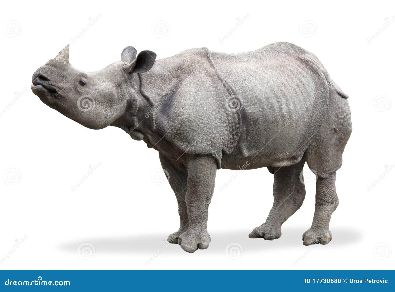 Download Rhinoceros stock photo. Image of animal, horned, rhinoceros - 17730680