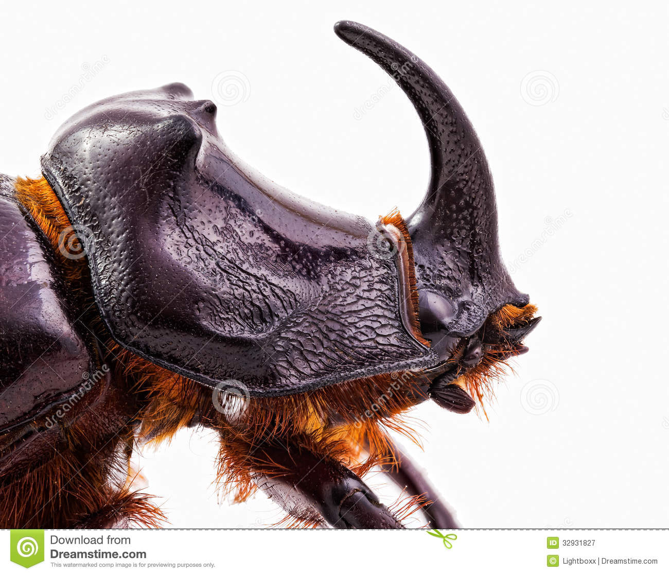 rhinoceros beetle head royalty free stock photography rhinoceros clipart rhinoceros clip art black and white
