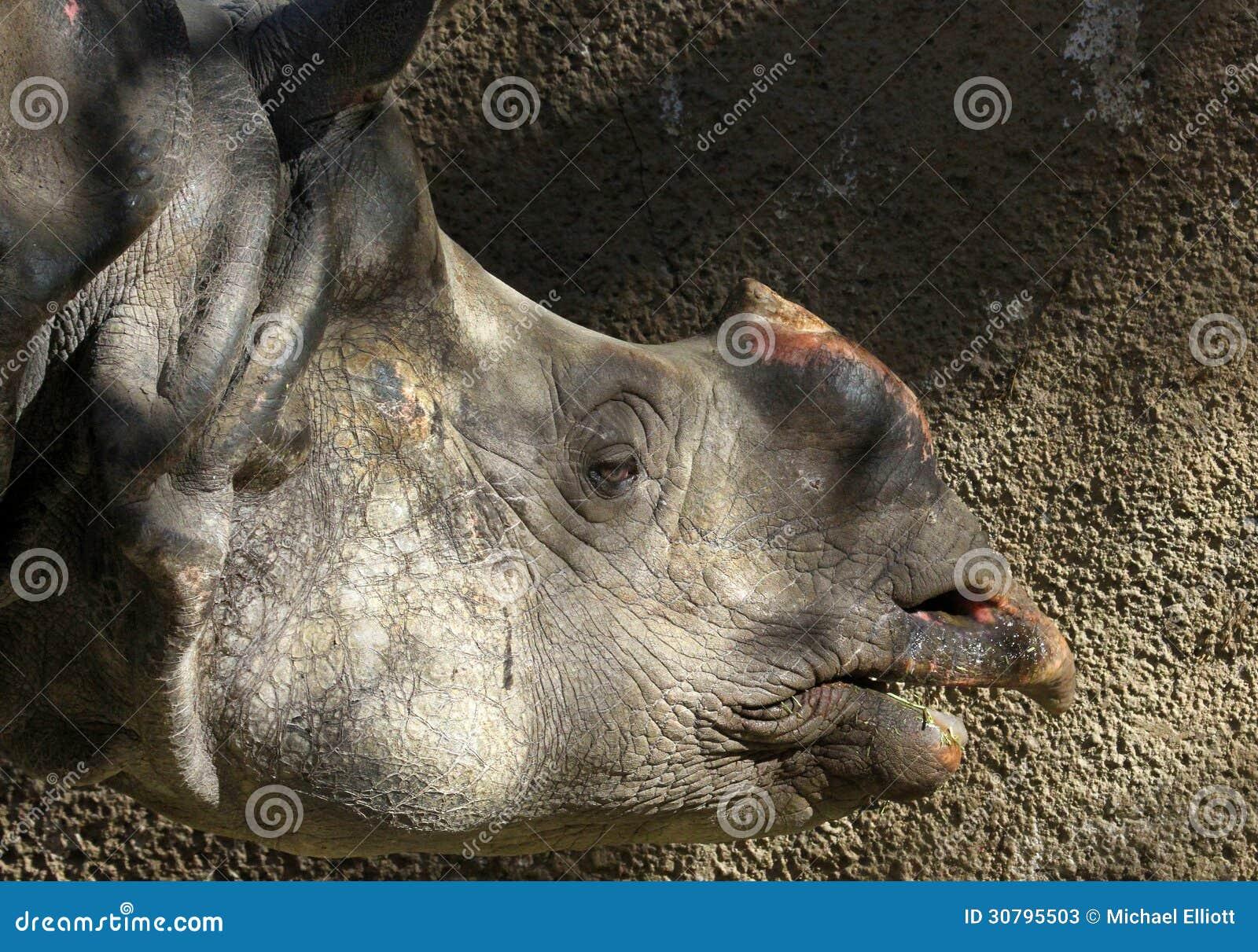 how to close mesh rhino