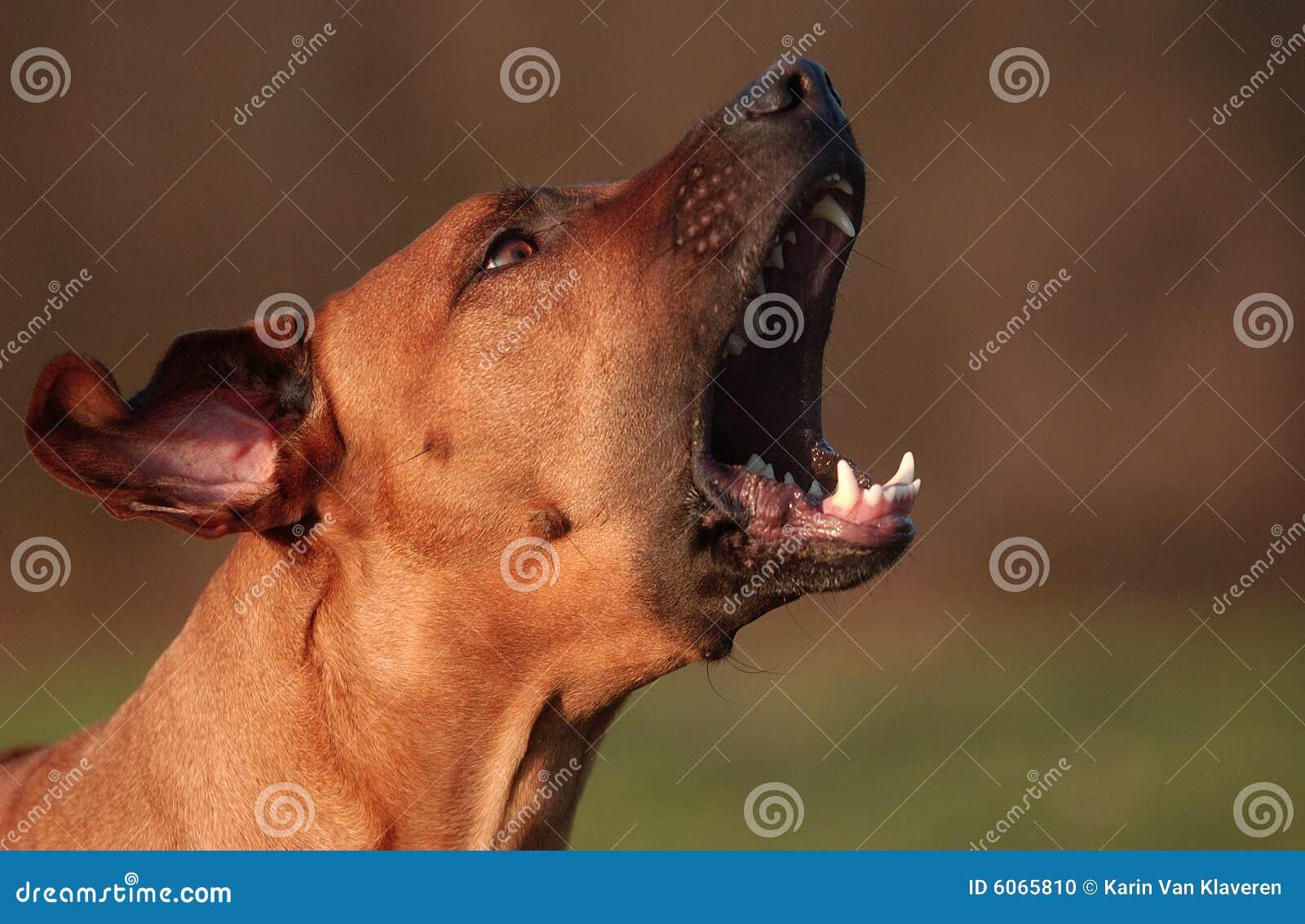 Почему воют собаки когда умирает человек