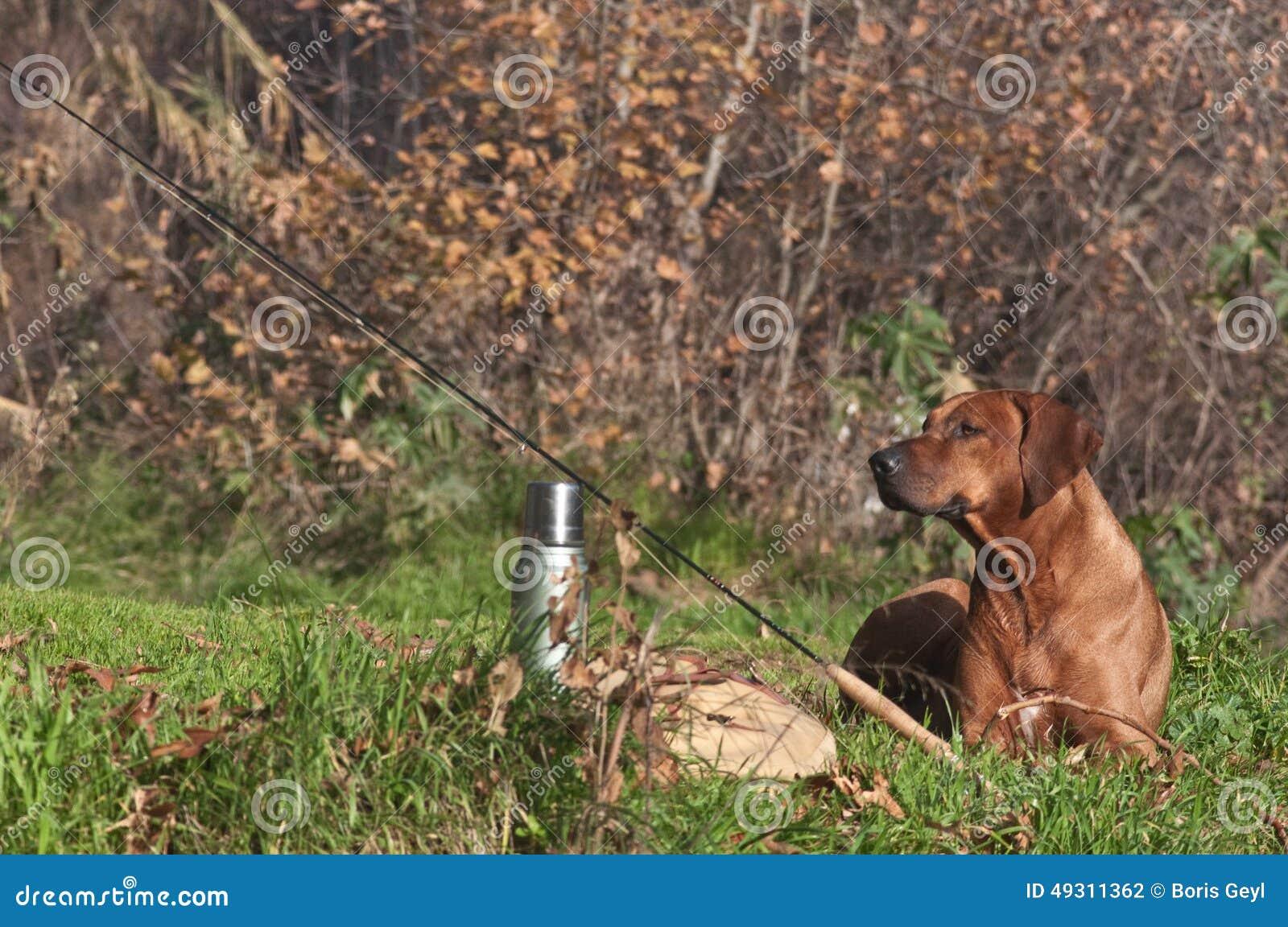 Rhodesian ridgeback lies on grass near fly fishing tackle for Fly fishing supplies near me