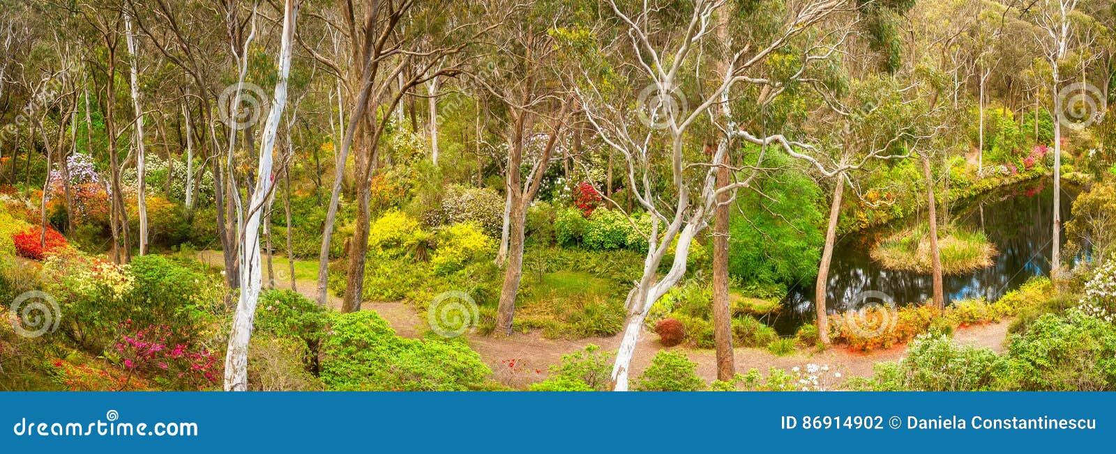 Rhododendron garden panorama