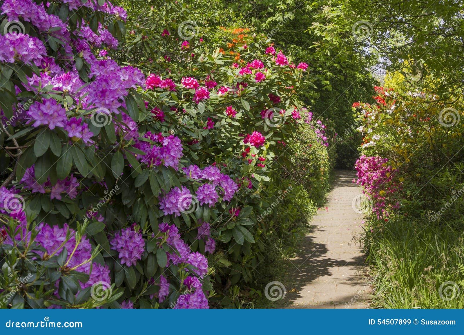 Rhododendrons dans diverses couleurs