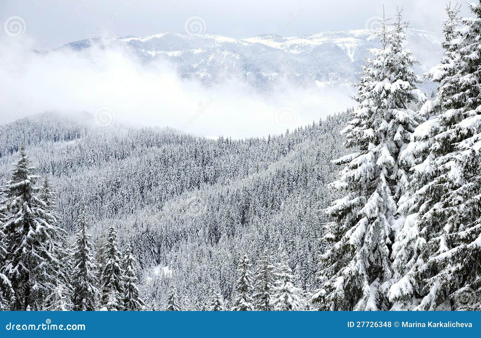 Rhodope Winterwald