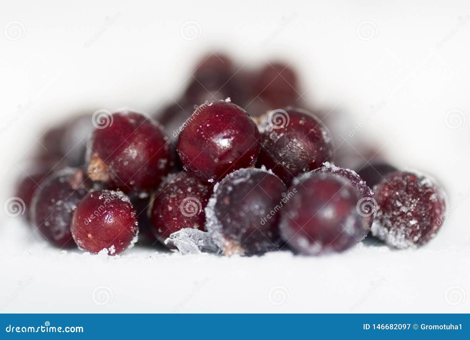 Ribes nero delle bacche fresche sotto una coperta del ghiaccio di estate calda Bon Appetit