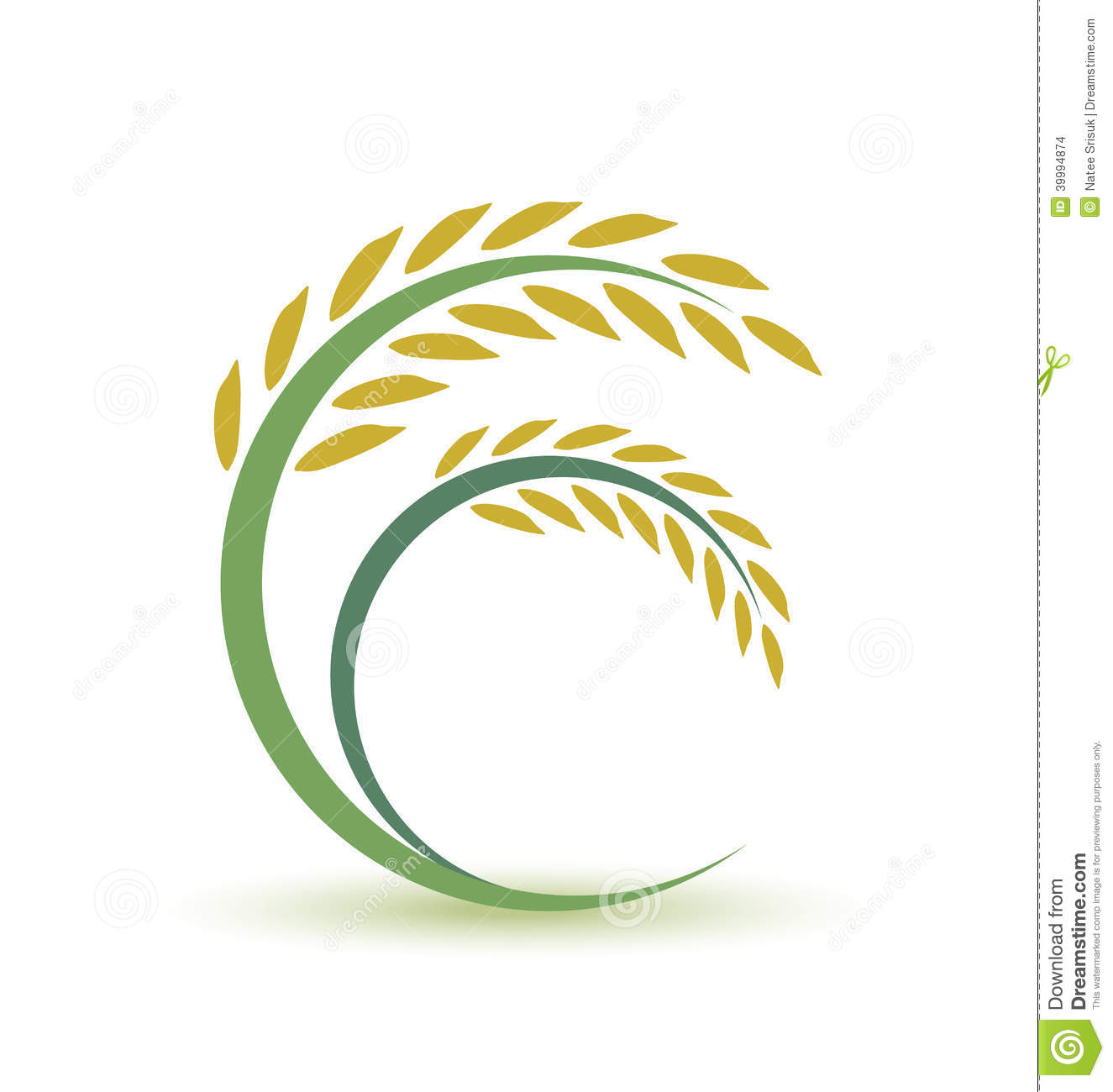 Rice design stock vector. Image of field, plant, natural ...
