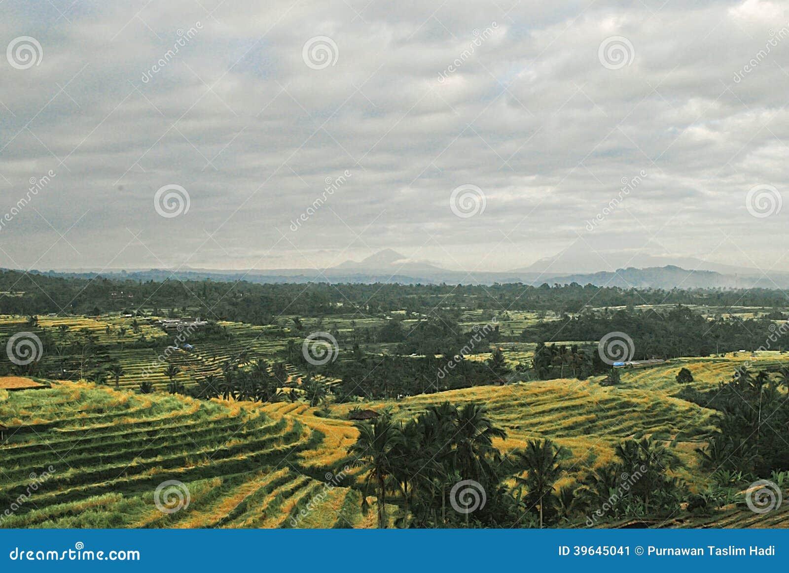 beautiful yellow field landscape-#31