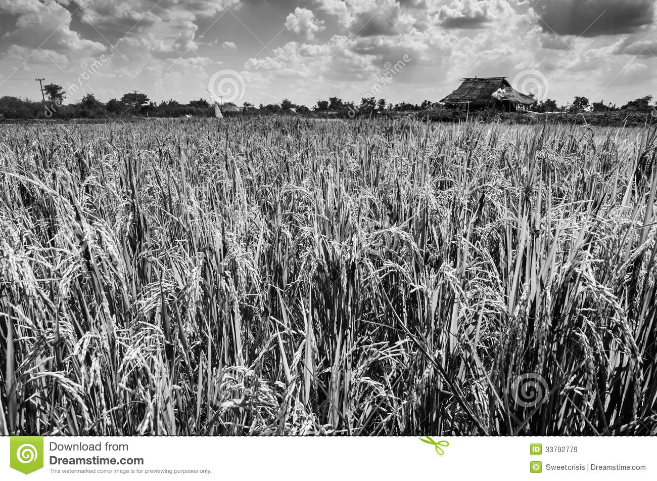 Agriculture Clipart Black And White Rice Field Black And W...