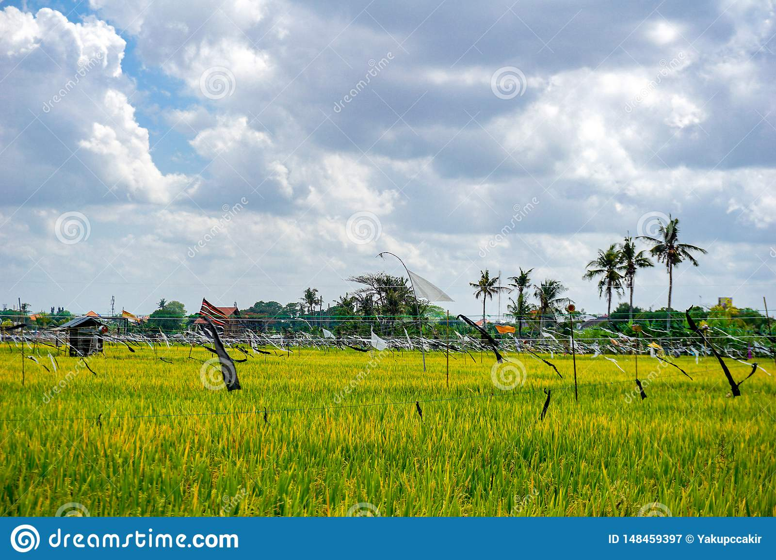Rice Field Palm Trees And Houses Rural Landscape Bali