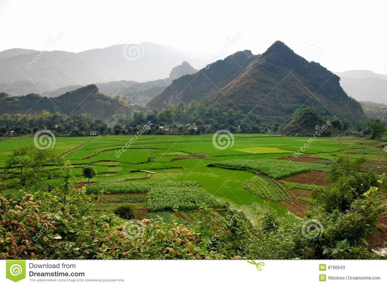 Rice field in Sapa