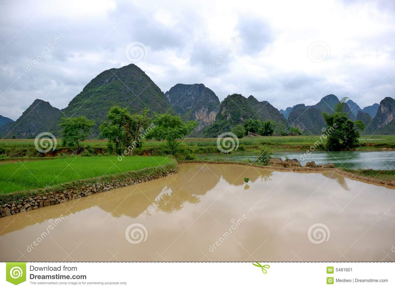 Rice field on the valley