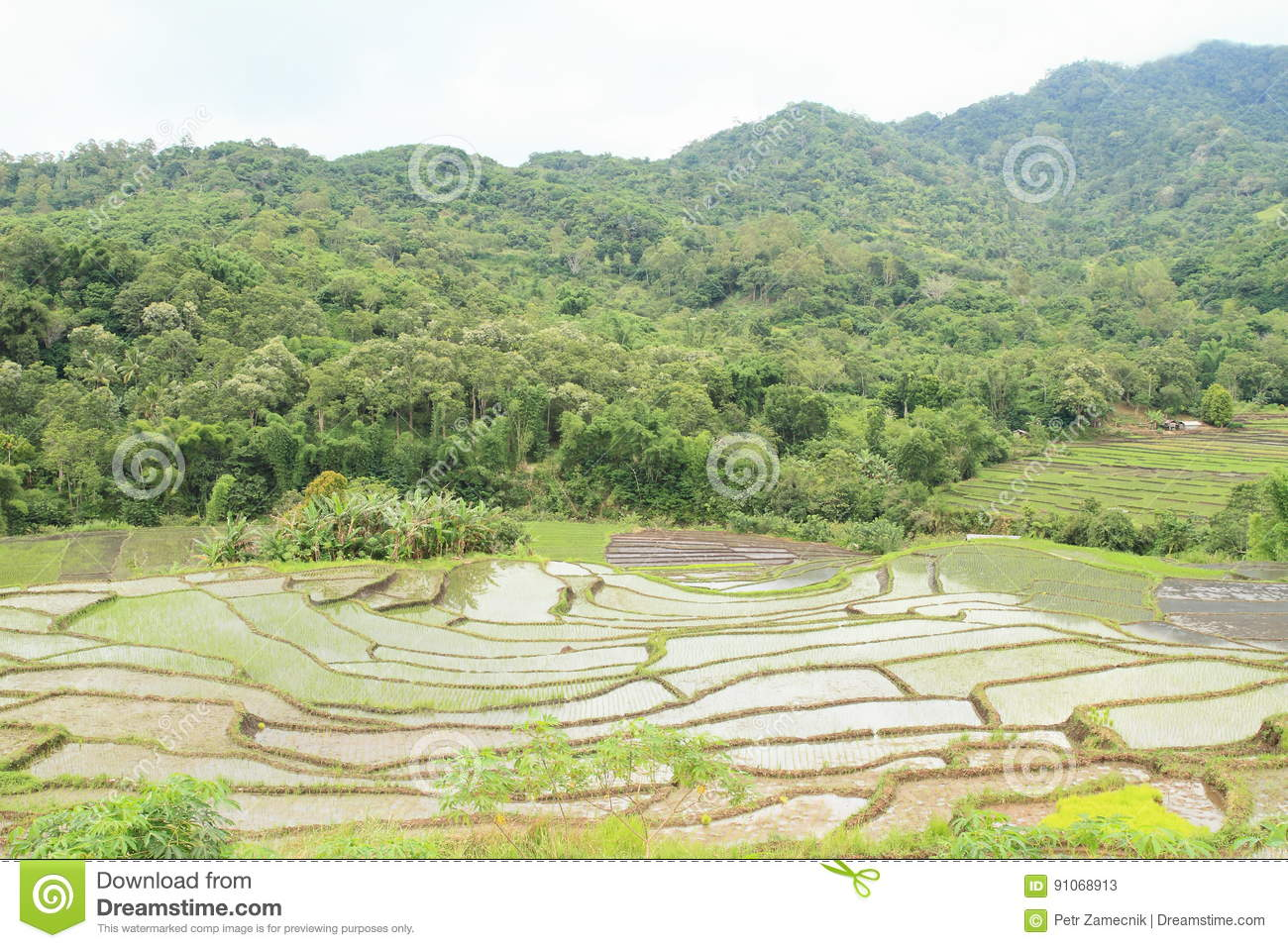 Rice fields in mountains on Flores