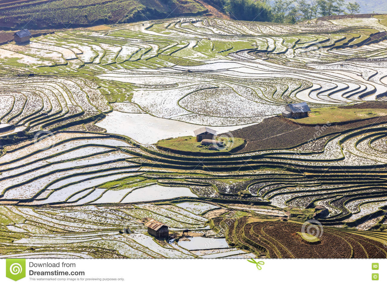 rice in vietnam This is a particularly troubling situation for vietnam's 'rice bowl' – the twelve provinces of south vietnam's mekong delta – where up to 80 percent of the population is involved in rice farming.