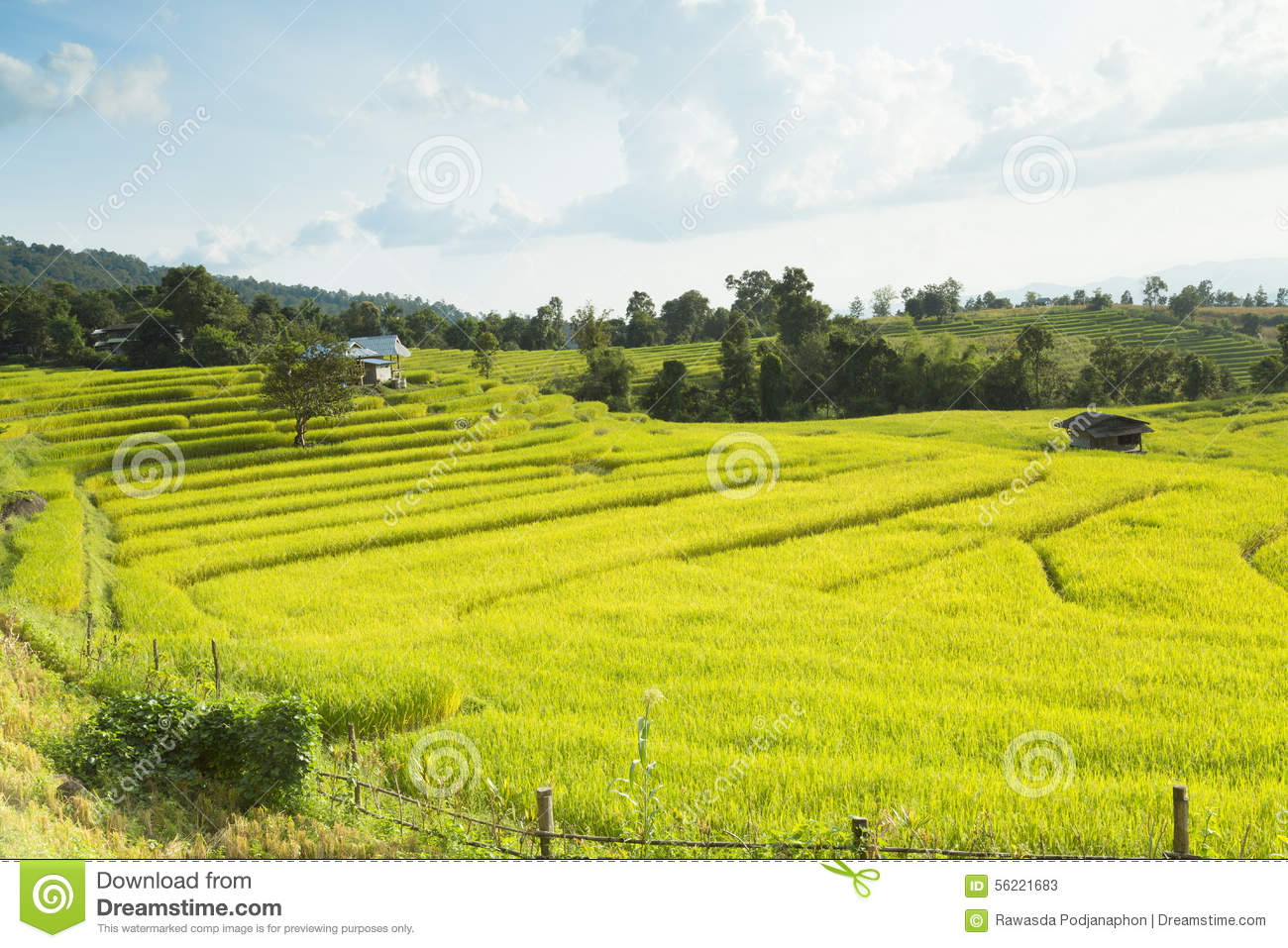 Mae Chaem Thailand  City pictures : Rice Fields On Terraced Of Mae Chaem, Ching Mai, Northern Thaila Stock ...