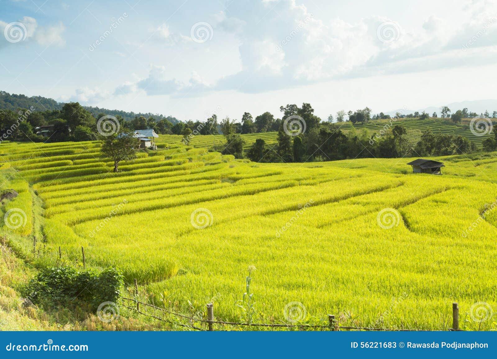 Mae Chaem Thailand  city photos gallery : Rice Fields On Terraced Of Mae Chaem, Ching Mai, Northern Thaila Stock ...