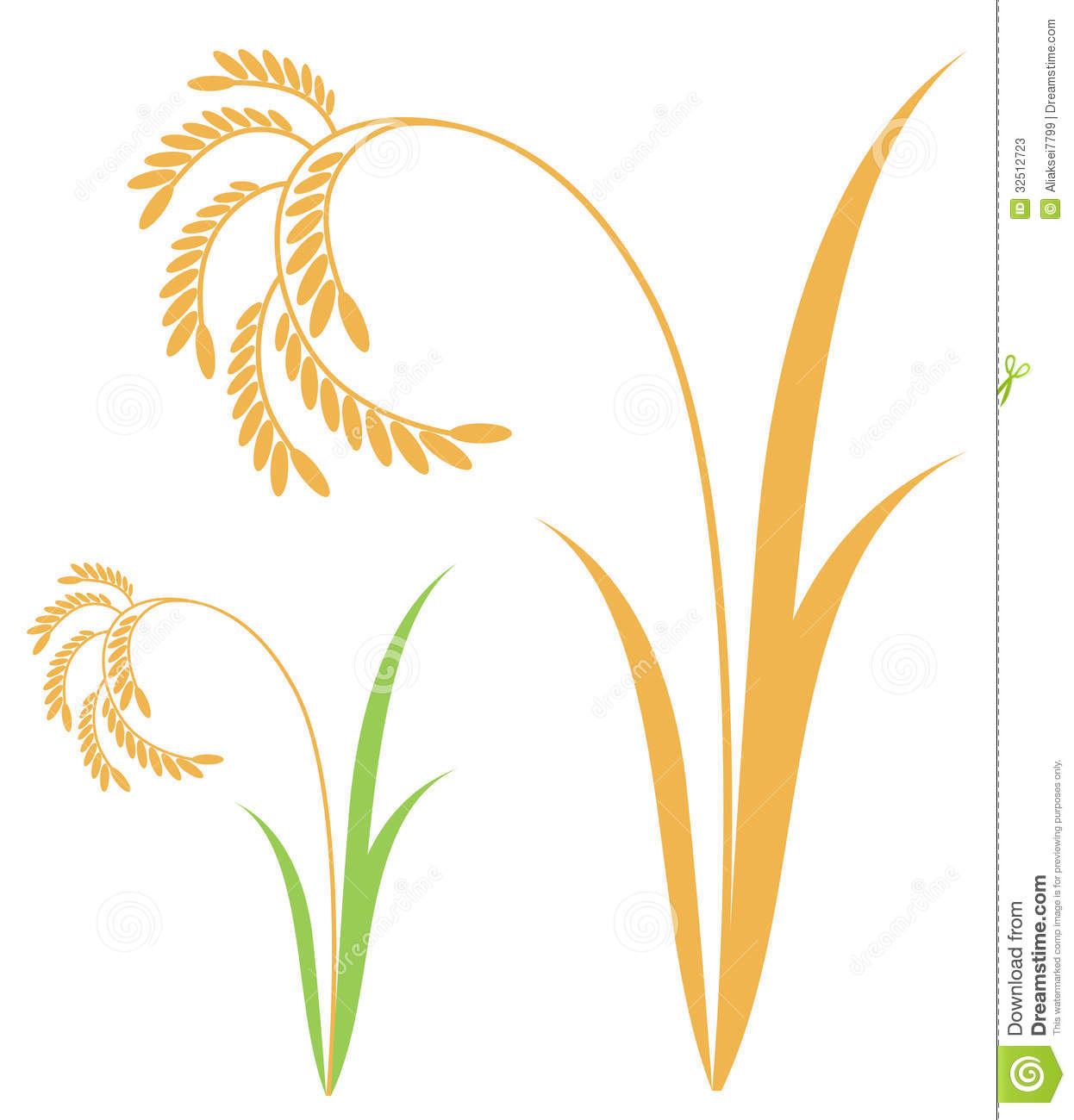 Rice. Isolated objects on white background. Vector illustration (EPS ...