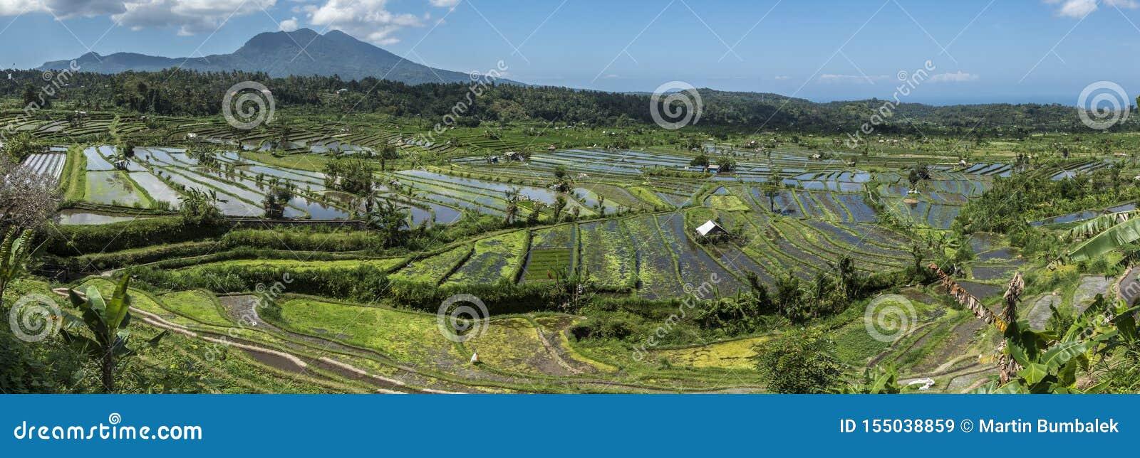 Rice odpowiada panoramę i wulkan
