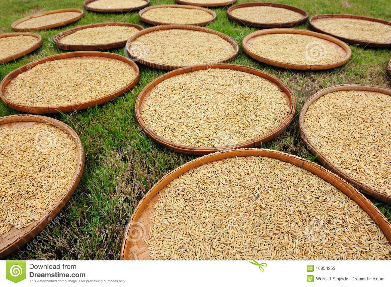 related literature about rice drying Layer rice drying to volumetric heat and mass transfer in a deep-bed of rice all mathematical models from literature and was found to be satisfactory.