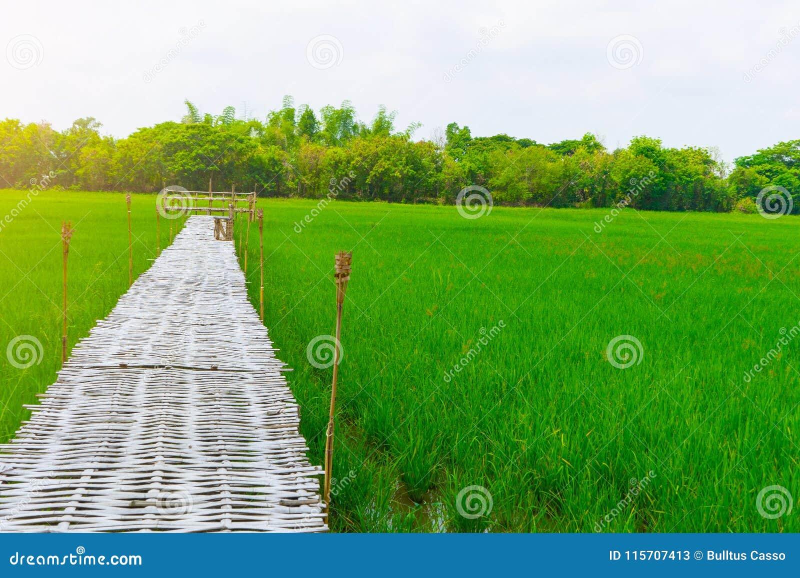 Rice pole i bambusa most dla podróżnika bierzemy fotografię